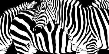 Verwirrende Zebrastreifen von Monika Jüngling