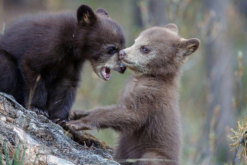 Twee kleine zwarte beertjes  van Menno Schaefer