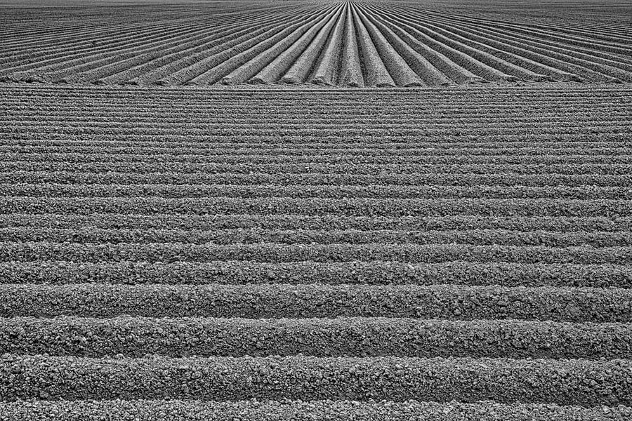 De aardappelen zijn gepoot van Jan Sportel Photography
