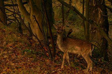 Hert in bos van Patrick Herzberg