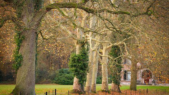 Speelse bomen langs de laan naar