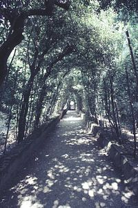 Bobolituinen in Florence