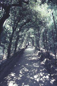 Bobolituinen in Florence van Jessica van den Heuvel