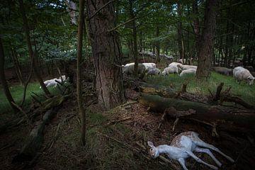 Bambi is dood van Marc Baars