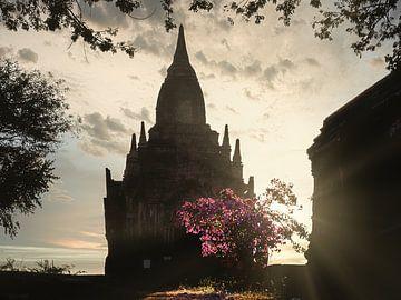 Myanmar - Bagan - De roze boom voor een pagode van Rik Pijnenburg