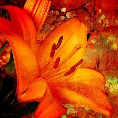 Daglelie in oranje met bloesem.
