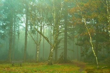 Mist in het herfstbos van Jenco van Zalk