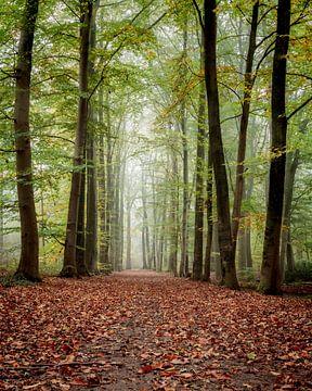 nevelig herfstbos van Arnoud van der Aart