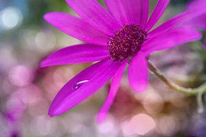 ash flower