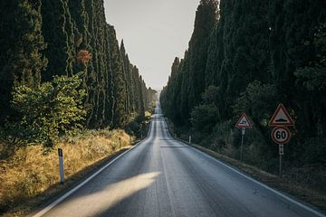Bolgheri Road revisited van Stefan Lucassen