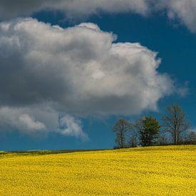 Koolzaadveld in volle bloei met blauwe lucht en wolk van Harrie Muis