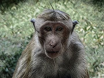 Oogcontact met een aap in Sri Lanka van Rietje Bulthuis