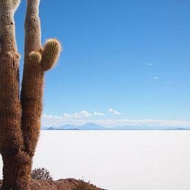 Le cactus et le sel sur iPics Photography