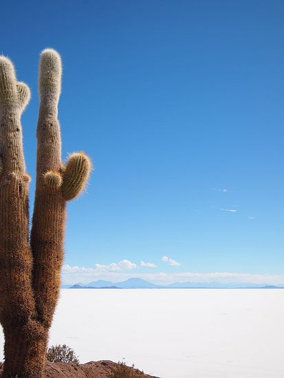 The cactus and the salt