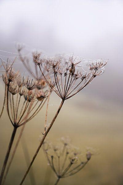 Morgentau an einem nebligen Novembertag von Elles van der Veen