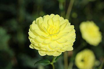 Bloem in geel von Edwin De smet