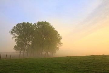 Morning Mood von Peet de Rouw