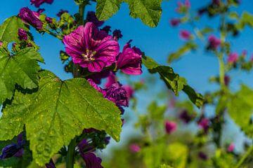 Schöne Feldblumen Blüte in Bayern von MyPics4u