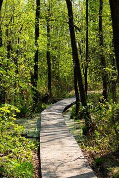 Brücke im Wald von Eefje