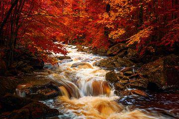 LP 71348405 Ilsenburg, rivier in Duitsland, herfst van BeeldigBeeld Food & Lifestyle