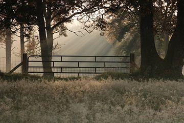 Zonneharpen bij een hek in het bos van Miranda Heemskerk