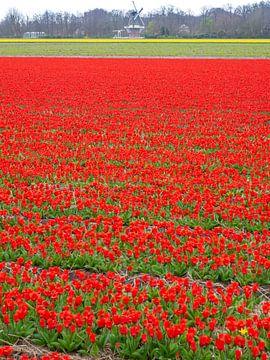 Tulpenveld met molen van Leo Lamboo