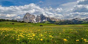 Voorjaar op de Alpe di Siusi van Teun Ruijters