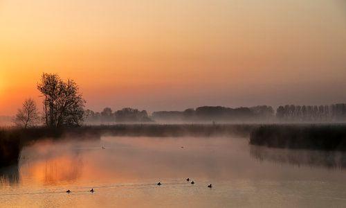 Nature Awakens I van Ellen Driesse