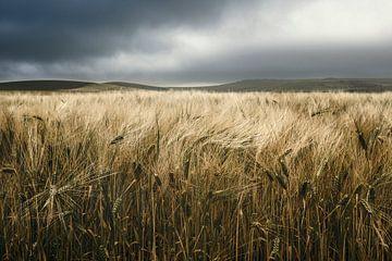 Landschap Cap Griz Nez van Peter Poppe