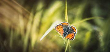 """""""Be a fairy. Dance like a butterfly.""""  van William Klerx"""
