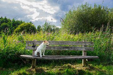 Hondje natuur van Pia Van Hemmen