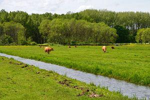 Kühe auf der Wiese von FotoGraaG Hanneke