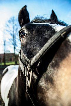 Ein schwarzweisses Pferd von Norbert Sülzner