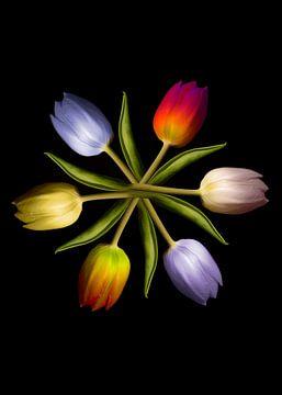Tulpen in een cirkel van Christiane Calmbacher
