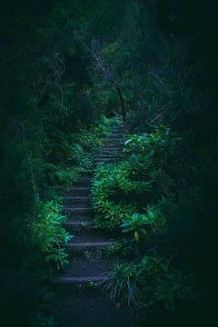 Treppe im Dschungel von Madeira von jonathan Le Blanc