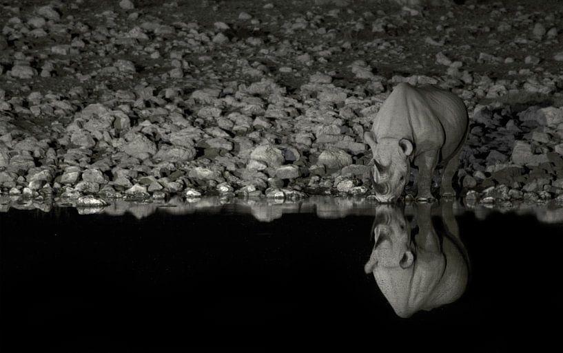 Drinking Rhino van BL Photography