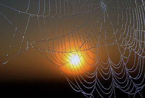 Spinnenweb met dauwdruppels bij zonsopkomst.
