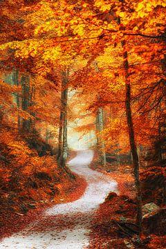 """Boslandschap """"Het Rode Bos"""" van Coen Weesjes"""