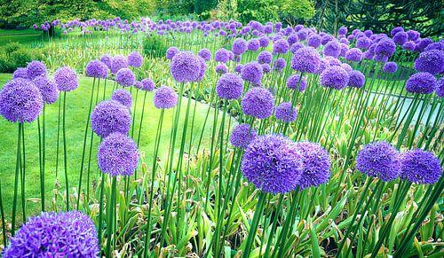 1086 Purple dance