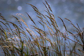 Gräser  von Pascal Raymond Dorland
