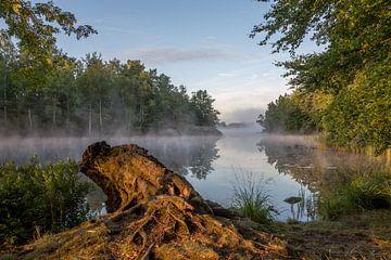 Baumstumpf am See bei Sonnenaufgang in Südschweden von Joost Adriaanse