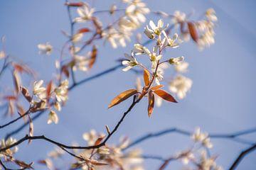 Le trac du printemps en photo sur Janneke Spijkers