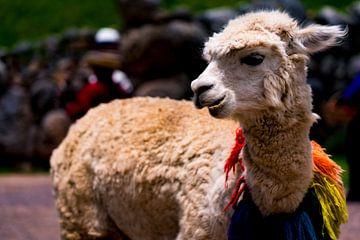 Vrolijk versierde lama in Cuzco, Peru van John Ozguc