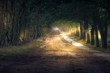 Beleuchteter Waldweg von Johan Honders