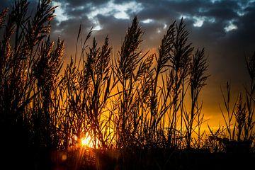 Riet bij zonsondergang, wolkenlucht von J.A. van den Ende
