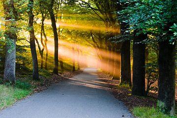 Sonnenstrahlen. von Sebastiaan Peek