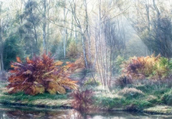 Schilderachtig herfstbos