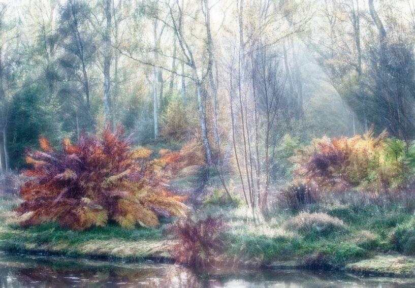 Schilderachtig herfstbos van Marcel van Balken