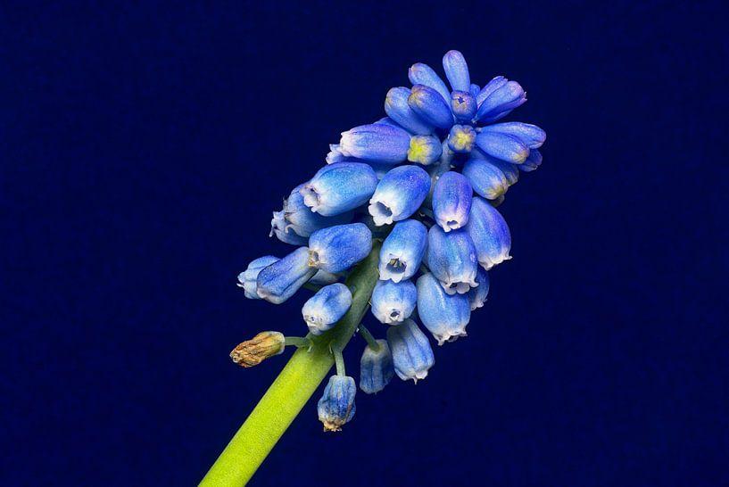 Blauw op blauw van Mike Bing