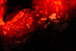 Fruitvliegjes in lava